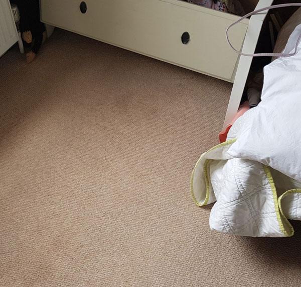 Carpet Cleaning Services in Bedford